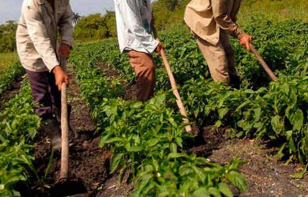 Resultado de imagem para agricultores