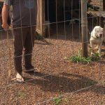 Homem foi flagrado batendo em um cão com um relho no Bairro Boa União, em Estrela (Foto: Reprodução / Divulgação)