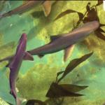 tubaroes-corre-costa-encontrados-na-piscina-improvisada-do-criminoso-1616088074068_v2_900x506