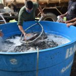 Feira do Peixe