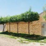 árvores frutiferas calçadas 1