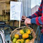 """Bicicleta com uma cesta cheia de bergamotas indica: """"Sirva-se, é para você"""" (Foto: Gabriela Hautrive)"""