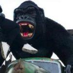 gorila-beto-carrero-g1