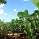 Plantio de soja deve crescer na região (Foto: Ilustrativa / Pixabay)