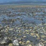 2021-07-10t191810z-1-lwd001a5r4abr-rtrwnev-e-6071-canada-weather-shellfish