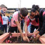Alunos participaram do plantio de árvores