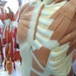 Univates inicia atendimentos de reabilitação do pós-covid na próxima semana