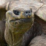 xjonathan-tartaruga-2.jpg.pagespeed.ic.jvJjzB-qkn