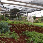 Irrigação é feita com água coletada da chuva (Foto: Divulgação)
